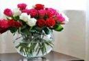 Как можно продлить жизнь розам?